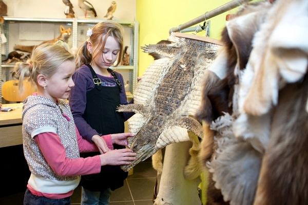 In het Open Atelier is de preparateur aan het werk. Hier kunnen bezoekers zien hoe een dier wordt opgezet of een skelet geprepareerd. De huiden die er hangen mogen aangeraakt worden, van de zachte vacht van een haas tot een de harde huid van een haai.