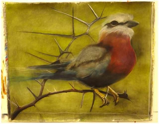 Birdie - Vogel